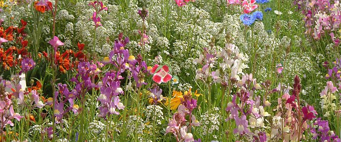 Wild Garden Flowers Gisborne Design Ideas